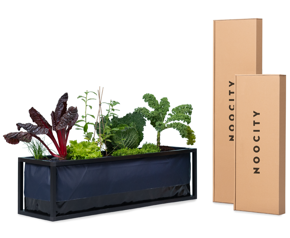 Kit_horta_em_casa_potager_de_balcon_vegetable_garden_kit